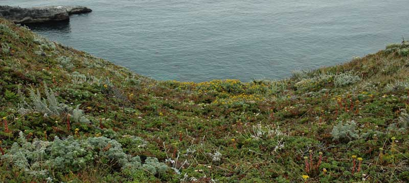 headlands vegetation